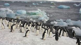 Polscy polarnicy spędzą święta w towarzystwie pingwinów i fok