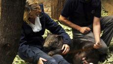 Apari już ledwie się mieści w torbie mamy (fot. Zoo Duisburg)